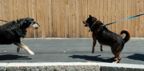 aggressive dogs on the street