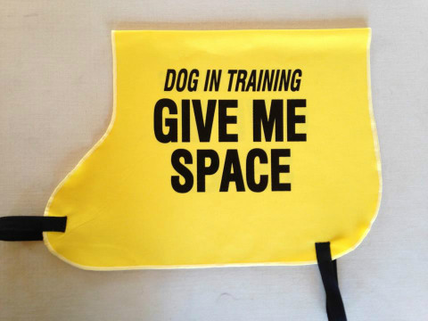 give dog space to pass