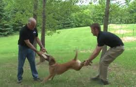 don't grab the dog by the back legs
