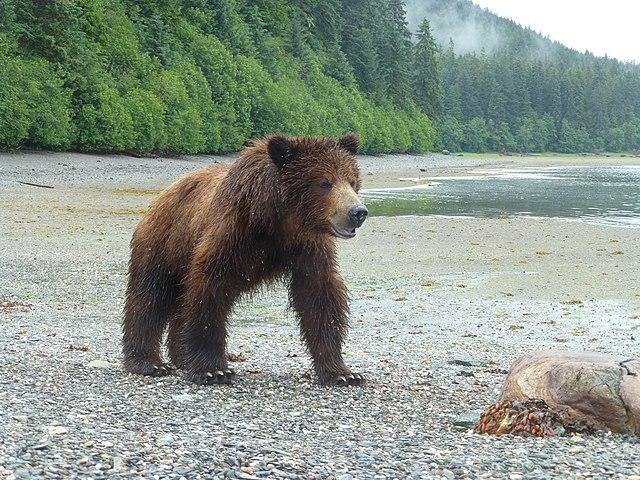bear guns