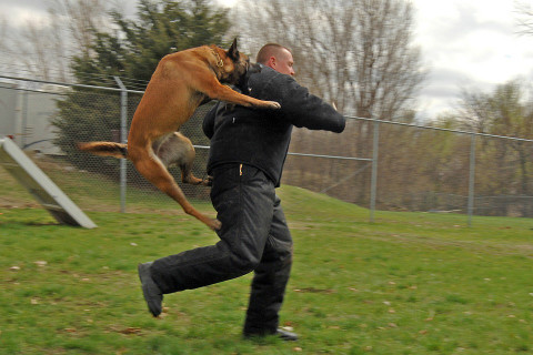 police training dog to go after attacker