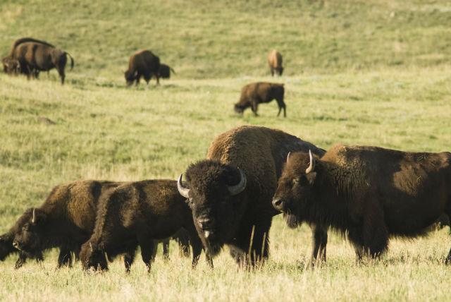 north dakota ccw permit